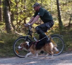 Fysträning för hund, del 2.